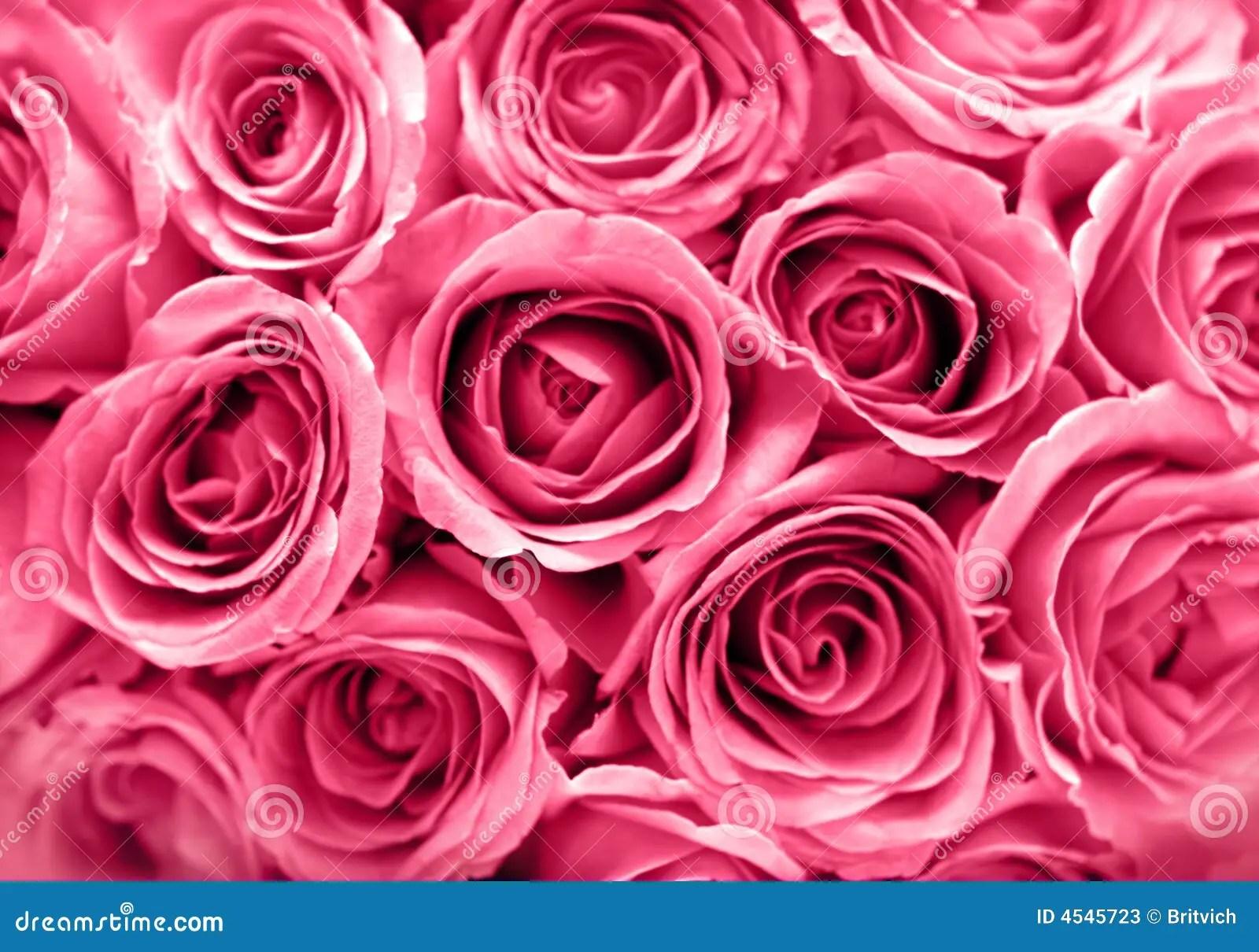 Pretty Wallpapers Rose Quotes Fundo Cor De Rosa Das Rosas Imagem De Stock Imagem 4545723