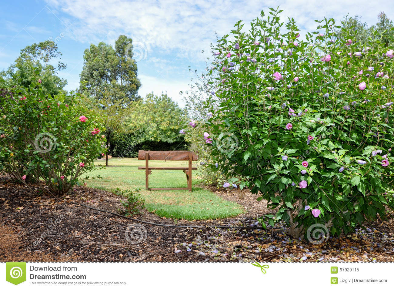 Garden Bench Australia Garden Bench Amongst Flowering Shrubs Editorial Image Image Of