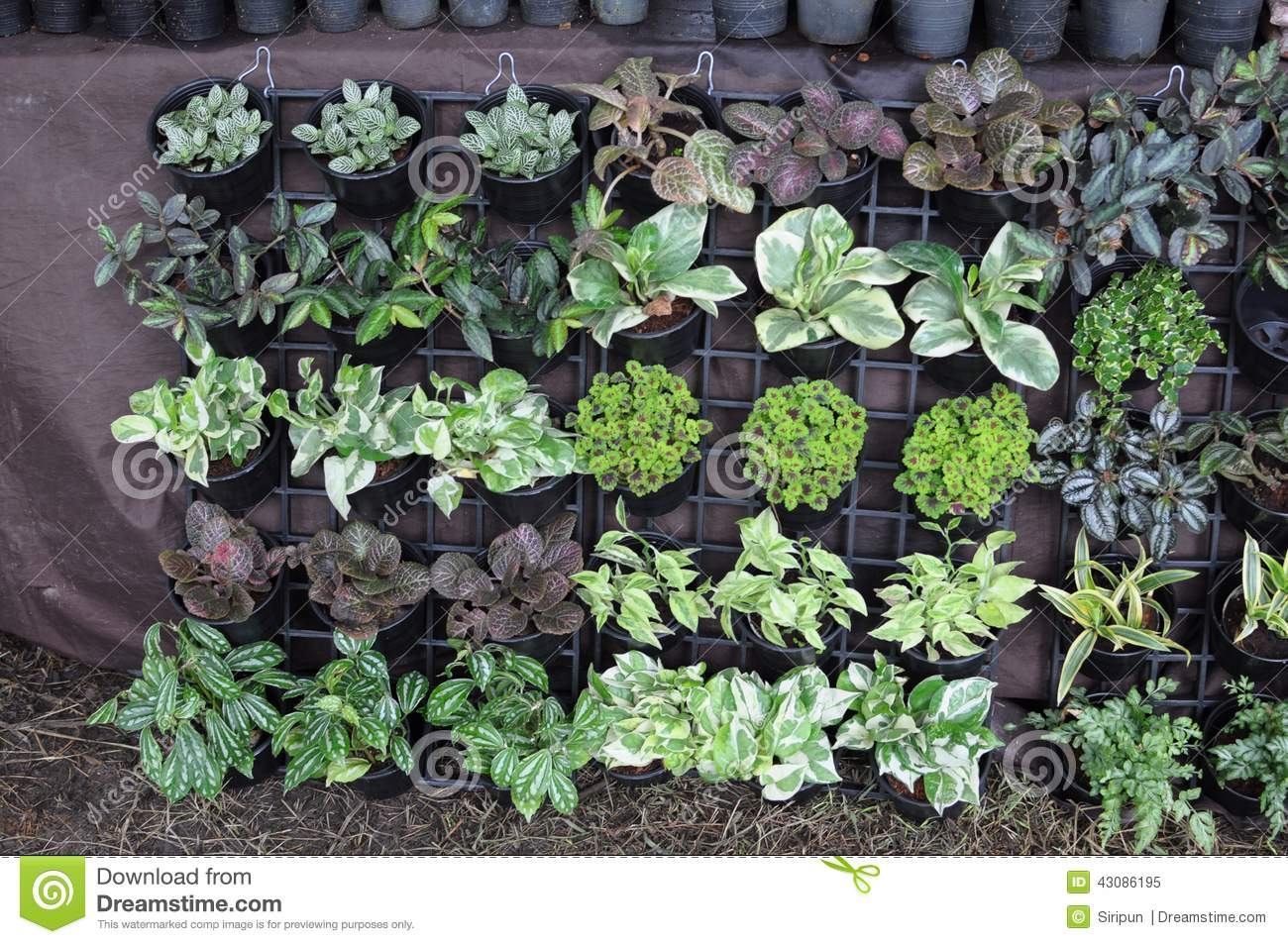 Garden Sale Garden Plants For Sale Stock Photo Image 43086195