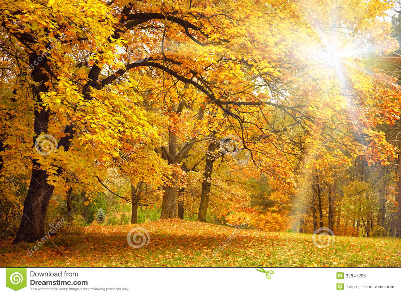 Fall Leaves Pathway Computer Wallpaper Gold Autumn With Sunlight Beautiful Trees In The Forest