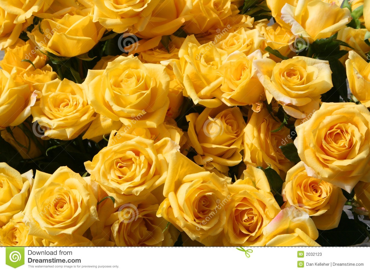 Rose Goud Gold Strike Roses Stock Image. Image Of Flowers, Yellow