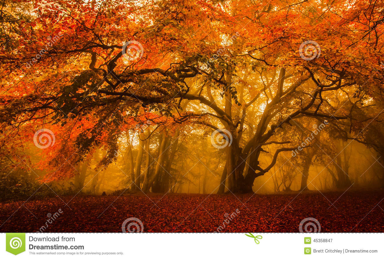 New England Fall Wallpaper Golden Fall Season Forest Stock Image Image Of Glorious