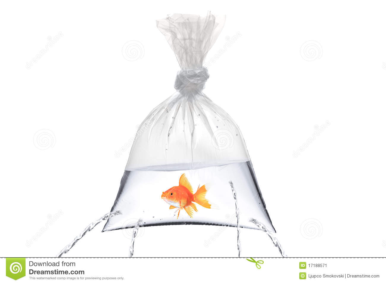 Ziploc Beutel Golden Fish In A Bag With Holes Stock Image Image 17188571