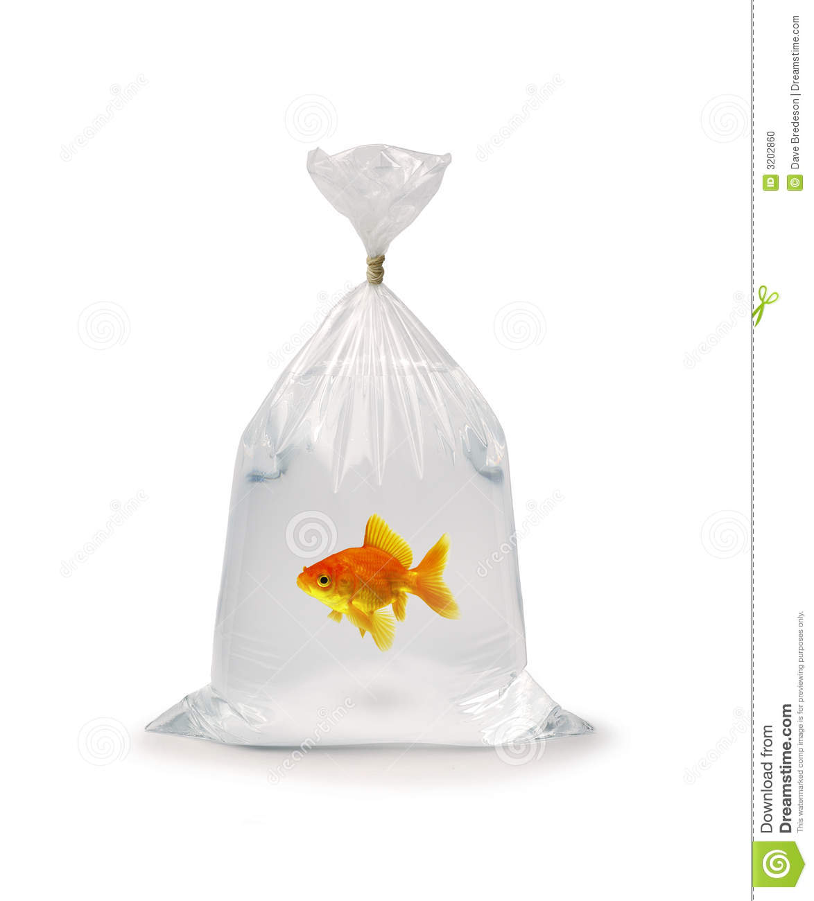 Ziploc Beutel Goldfish In Plastic Bag Stock Photo Image Of Home Take