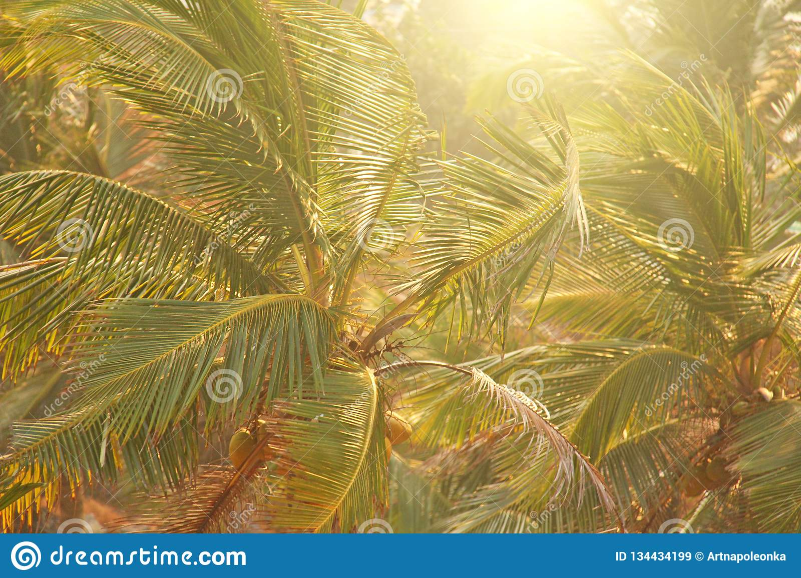 Palm Tree Wallpapers Green Background Of Palm Trees Exotic Tropical Background Palm