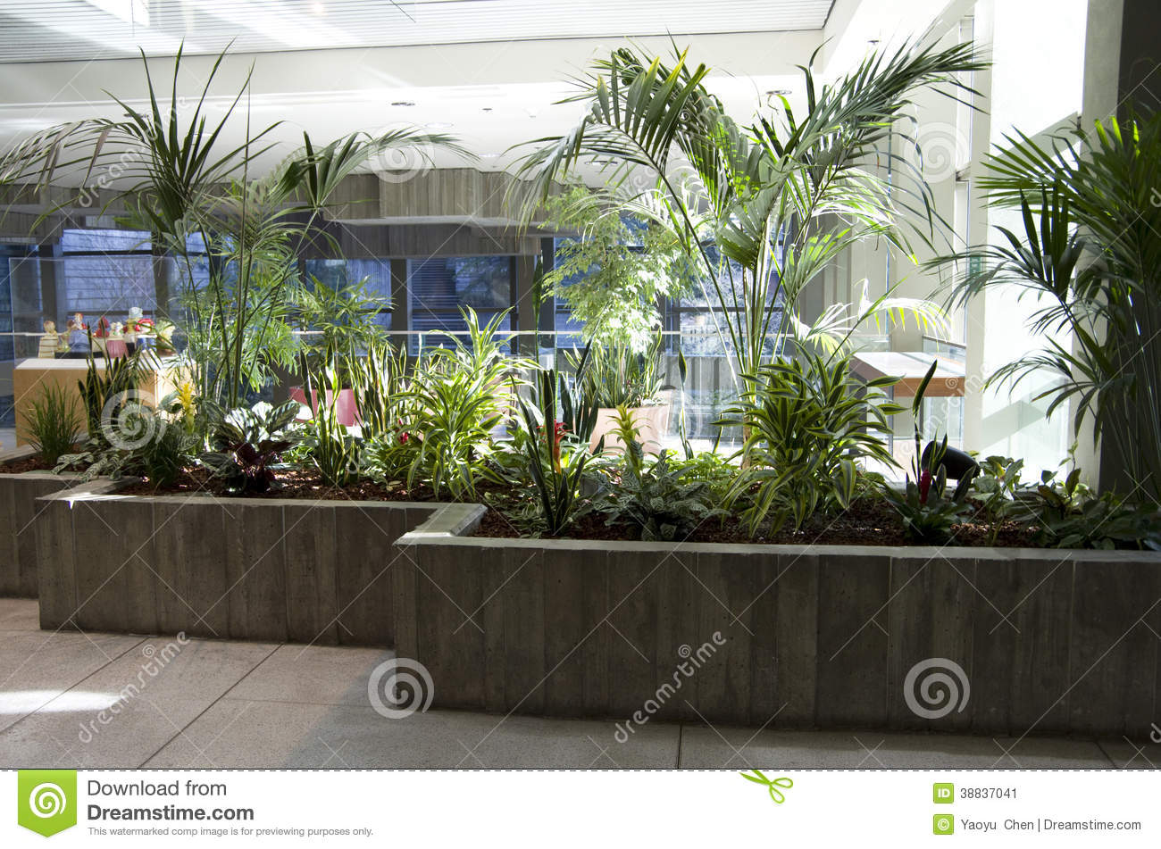 Nice Office Plants Green Eco Office Building Interiors Natural Light Stock