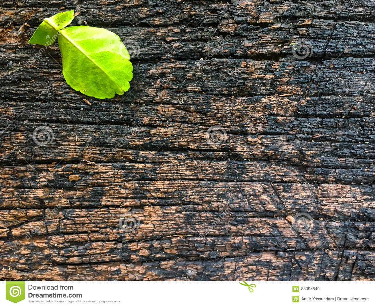 Rustic Dark Wood Background Path Decorations Pictures