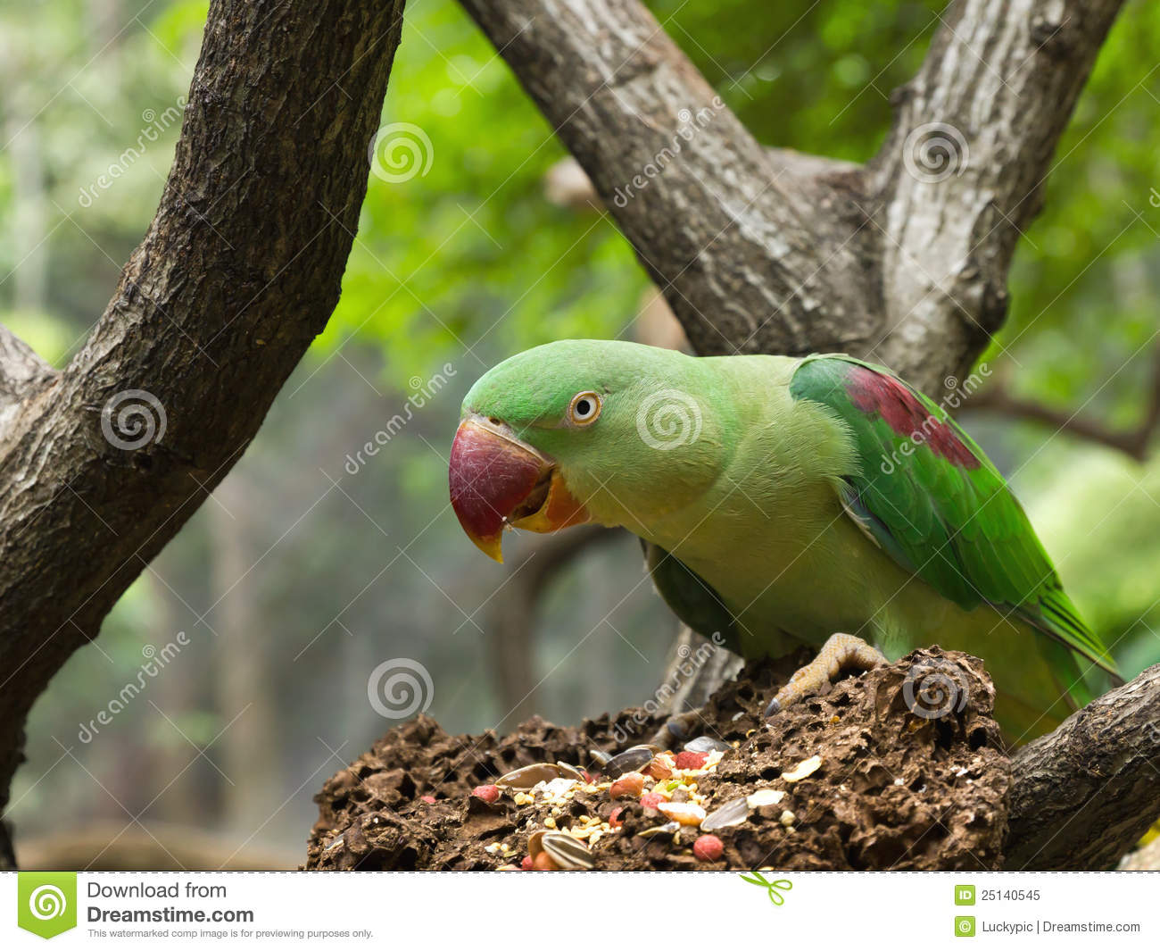Beautiful Wallpapers 3d Animation Green Parrot Bird Eating Grains Royalty Free Stock Photo