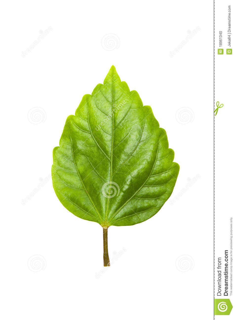 Graphic Stock Free Trial Green Tree Leave Stock Photo Image Of Garden Green