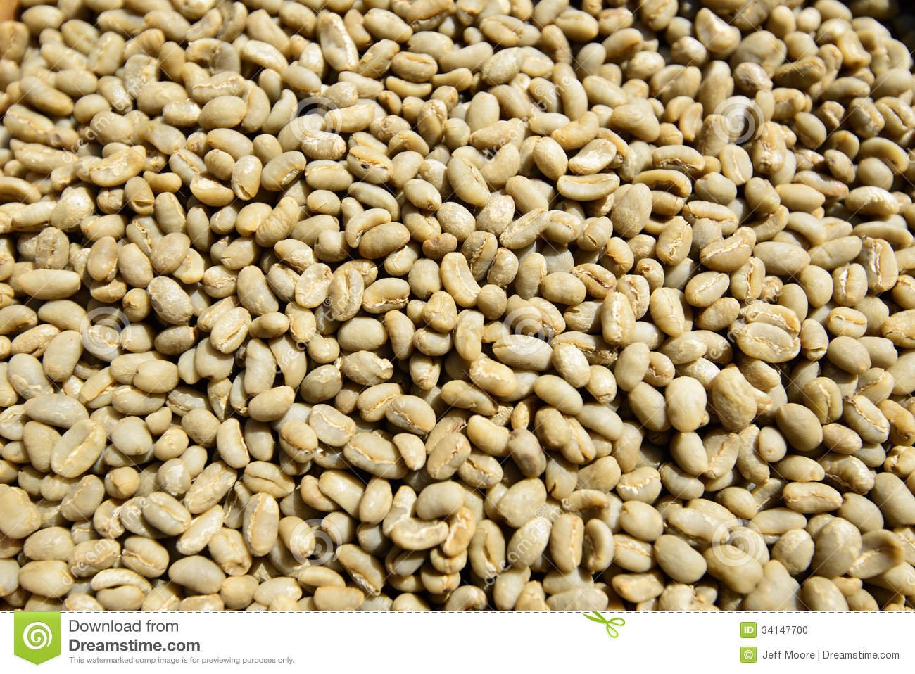 Unroasted Organic Arabica Coffee Beans Green Unroasted Coffee Beans Stock Photo Image 34147700
