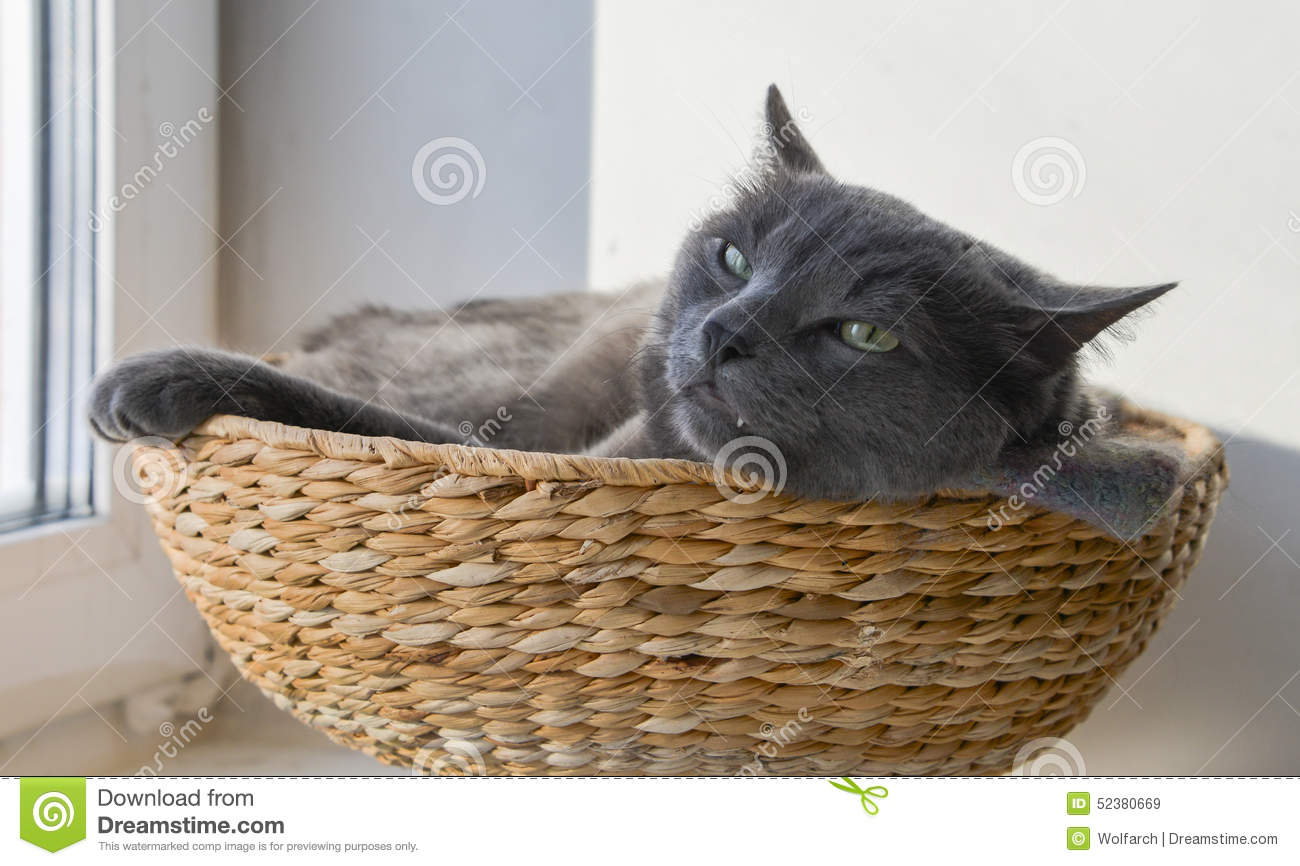 Katten Manden Grey Cat Has A Nap In The Wicker Basket Stock Image Image Of