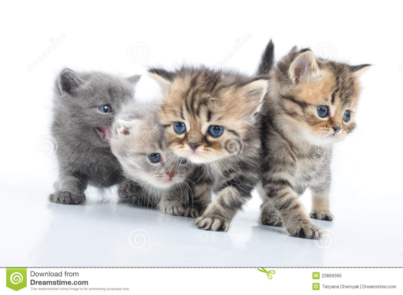 Cute Cat Moving Wallpaper Group Of Little Kittens Royalty Free Stock Photo Image