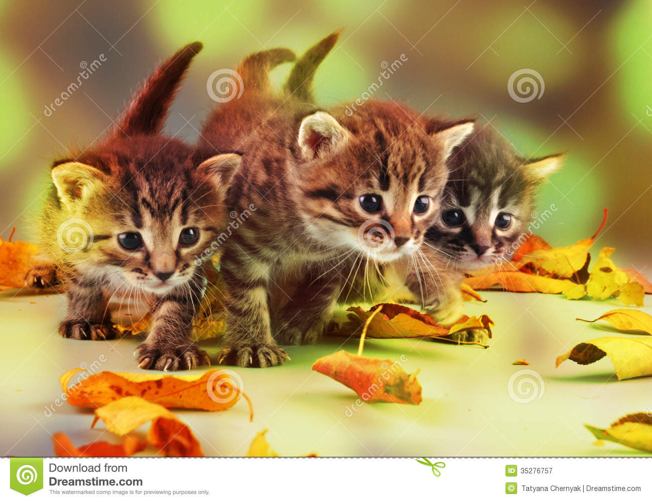 Playing In The Fall Wallpaper Group Of Small Kittens In Autumn Leaves Stock Image