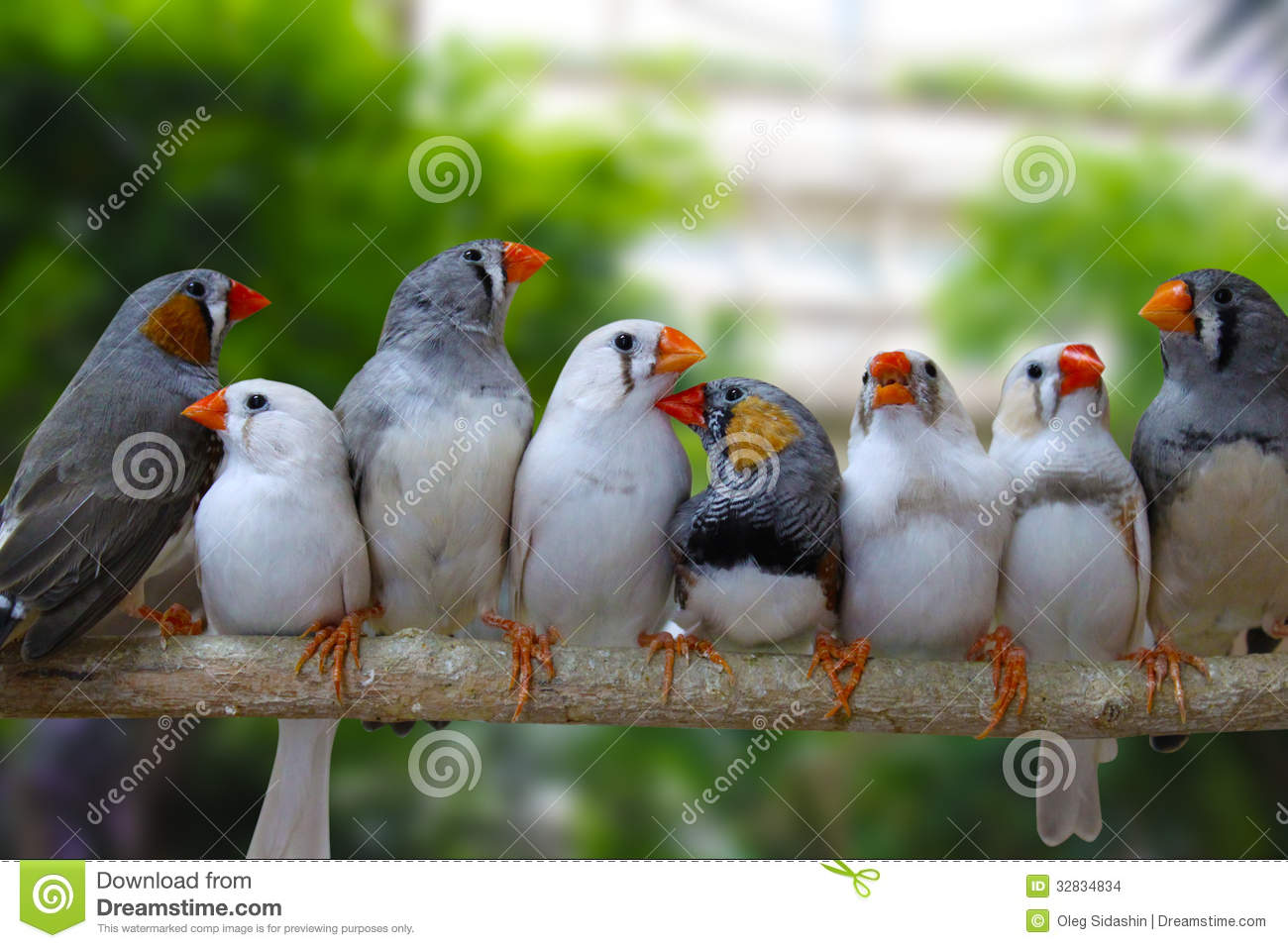 Cute Newborn Baby Hd Wallpapers Group Of Zebra Finch Birds Stock Photo Image Of Branch