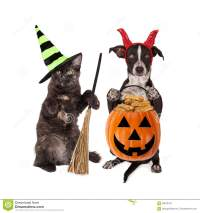 Halloween Cat And Dog Trick-or-Treating Stock Photo ...