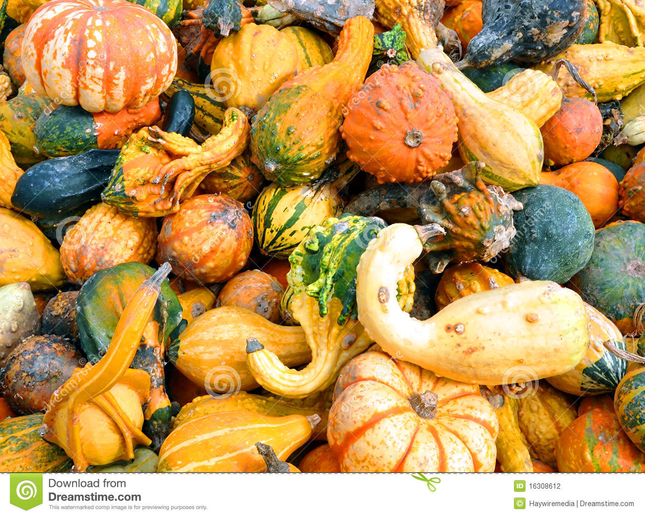 Hd Wallpaper Texture Fall Harvest Halloween Fall Pumpkin And Squash Background Stock Photo
