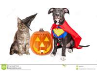 Halloween Puppy And Kitten With Pupmkin Stock Image ...