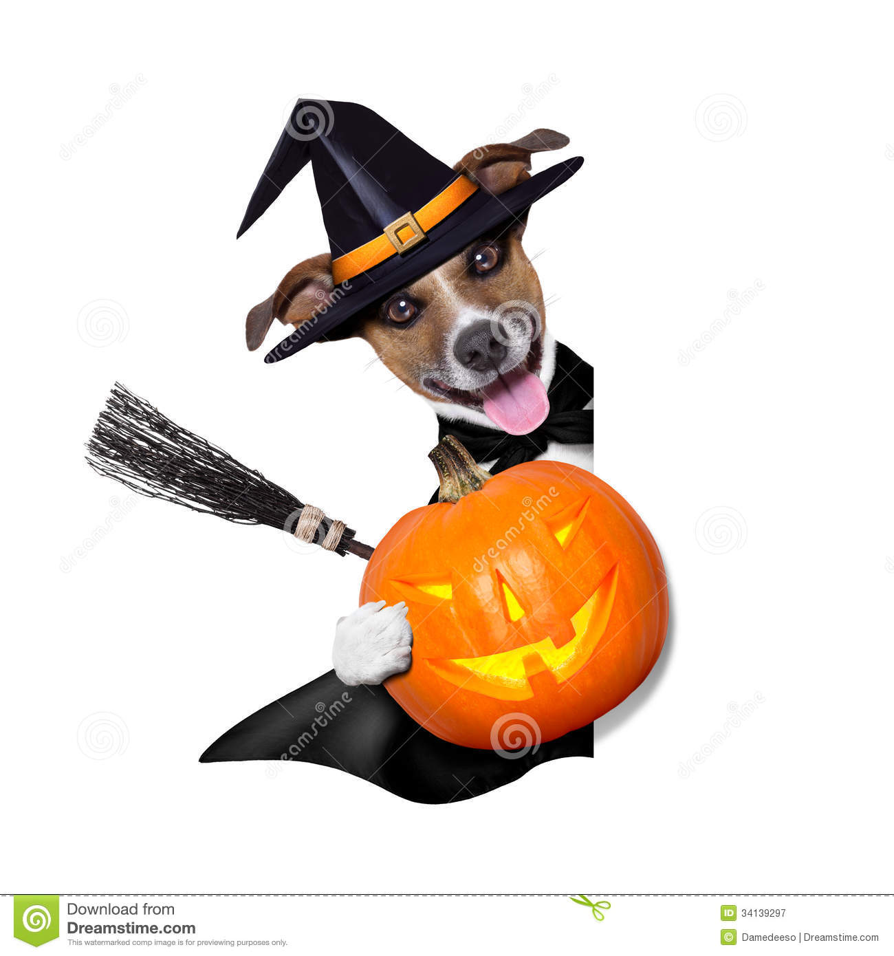 Colorful Animal Print Wallpaper Halloween Witch Dog Royalty Free Stock Photography Image