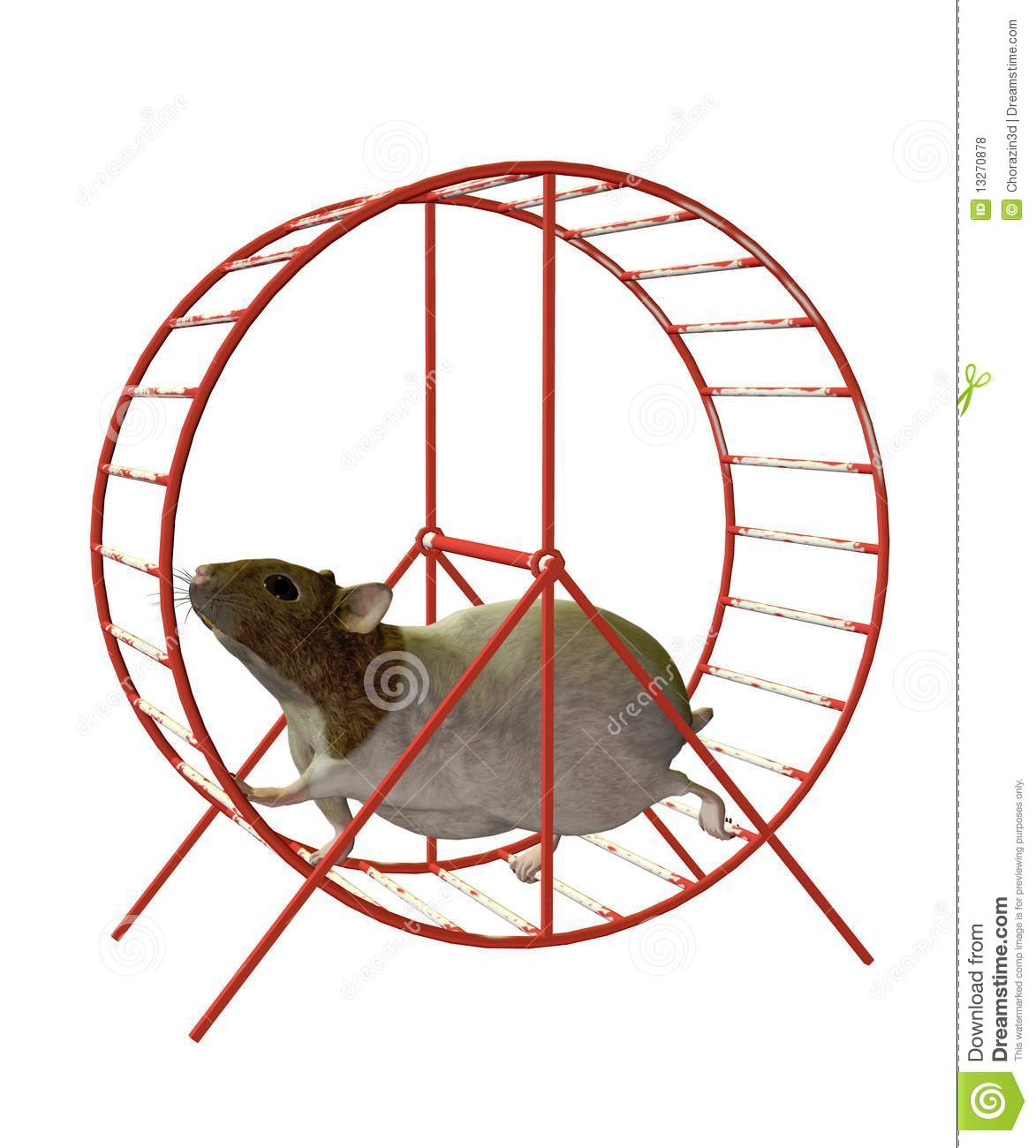 3d Frog Wallpaper Hamster On A Wheel Royalty Free Stock Photos Image 13270878