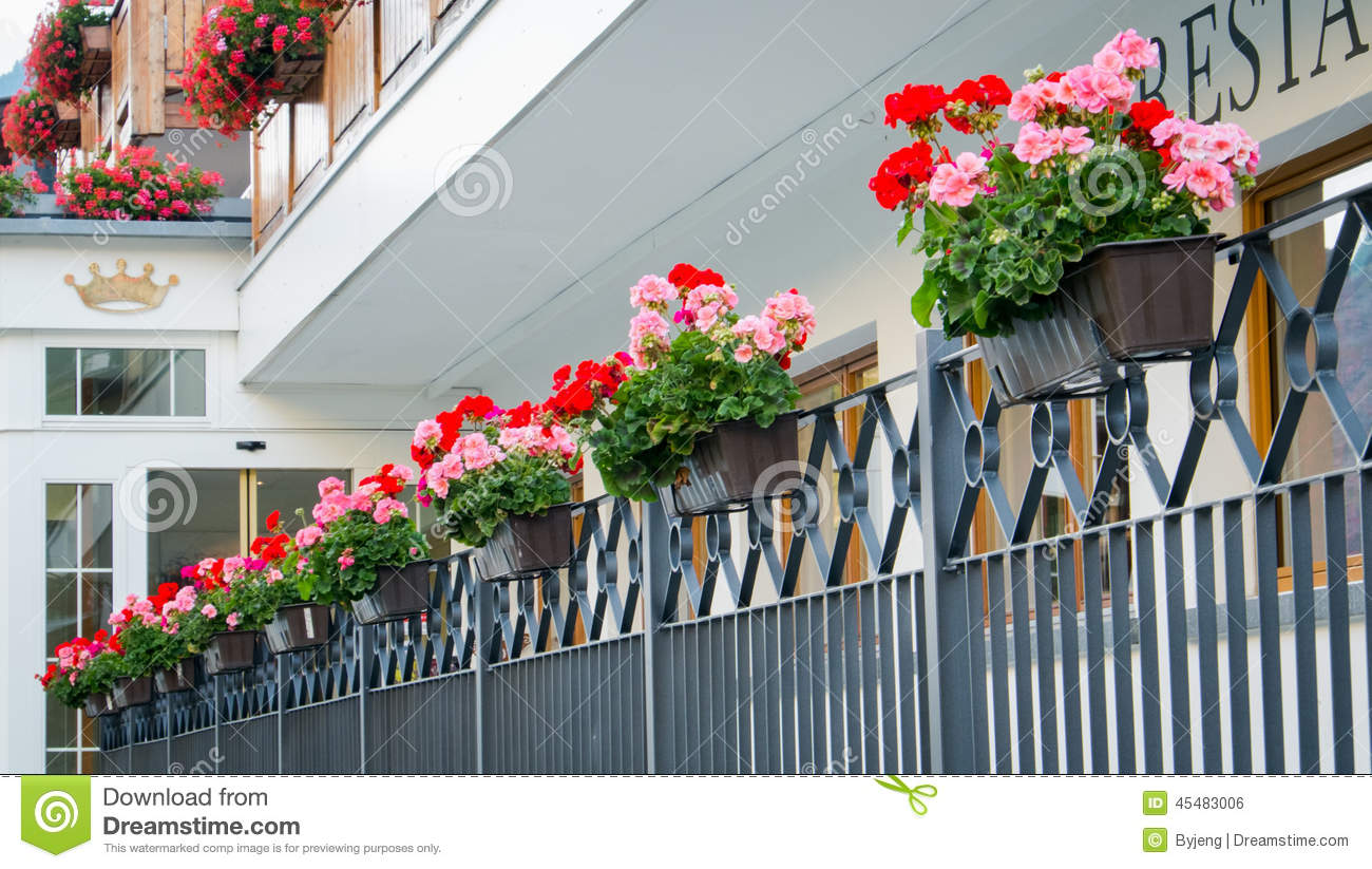 Front Yard Gate Hanging Flower Pots Stock Photo. Image Of Colorful, Gate