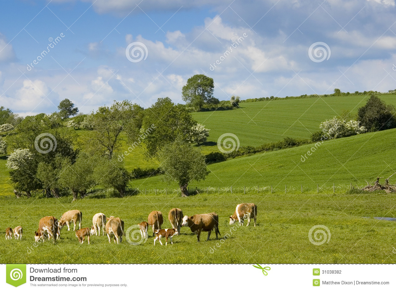 sheep farming business plan uk