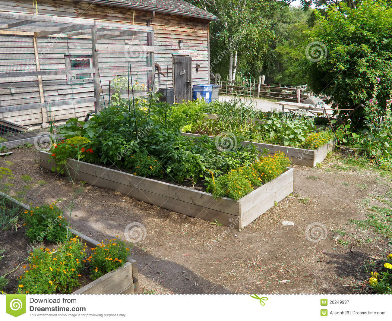 Herb garden royalty free stock photography image 20249987