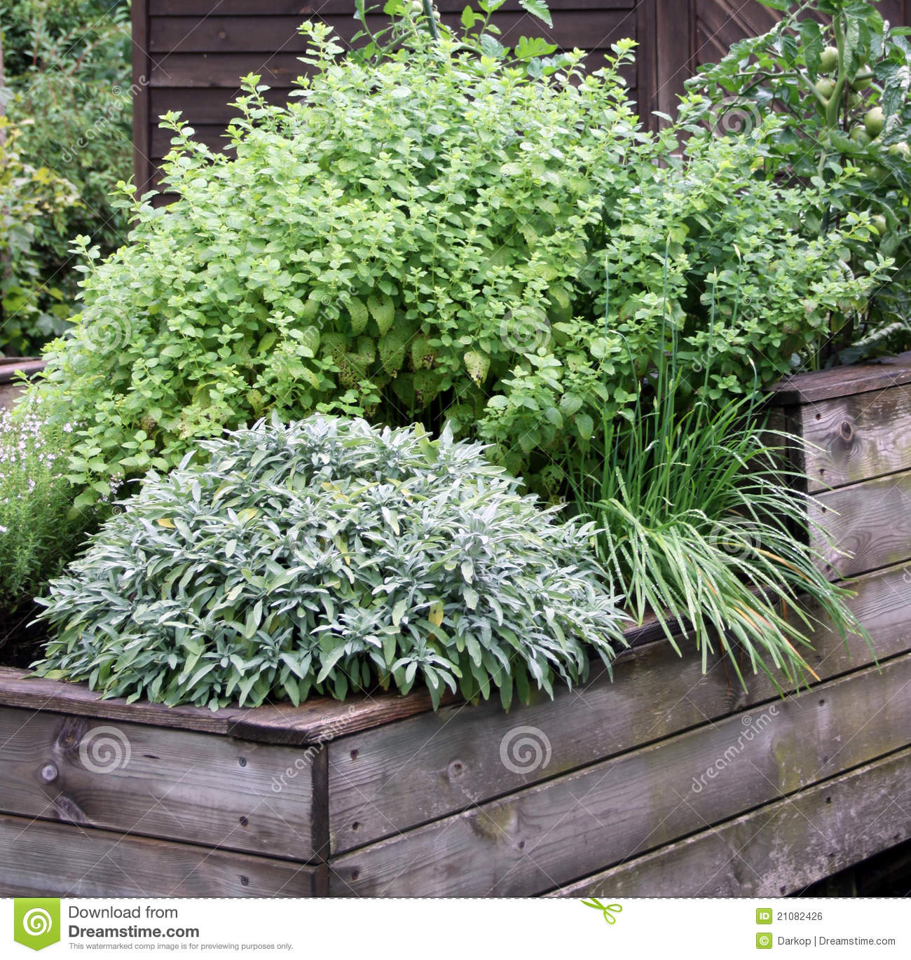 Colorbond Raised Garden Beds Stratco Herbs Plant On The Raised Garden Bed Stock Photo Image