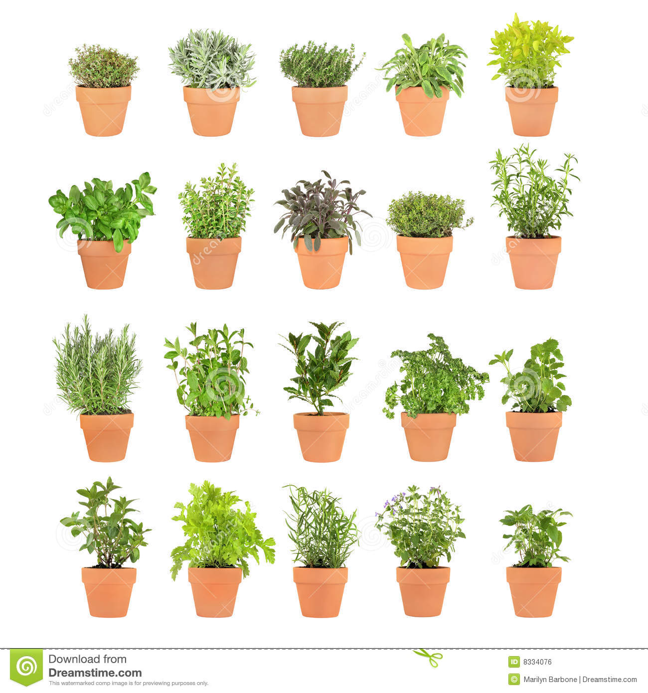 Different herbs royalty free stock image image 16265346 - Different Herbs Royalty Free Stock Image Image 16265346 Herbs In Pots Royalty Free Stock Image Download
