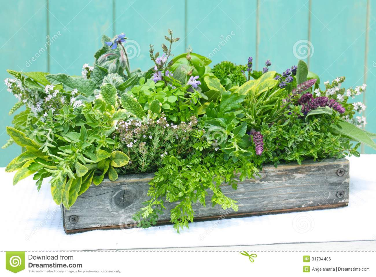 Planter For Herbs Herbs In Wood Planter Stock Photo Image Of Decorative 31794406