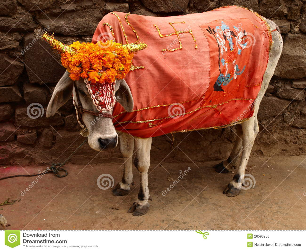 Red Animal Print Wallpaper Holy Cow India Stock Photo Image Of Holy Colours India