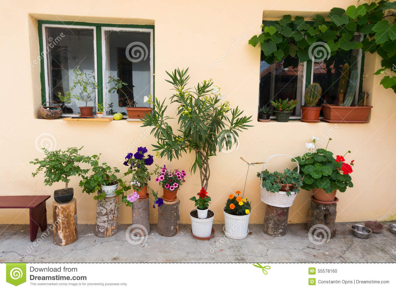 How To Make Beautiful Flower Pots At Home Home Flower Pots Decoration Stock Photo Image Of Growm