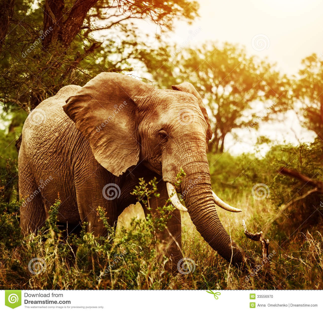 Om Animation Wallpaper Huge Elephant Outdoors Stock Photo Image 33556970
