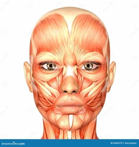 Female Human Body Anatomy Human Anatomy Face