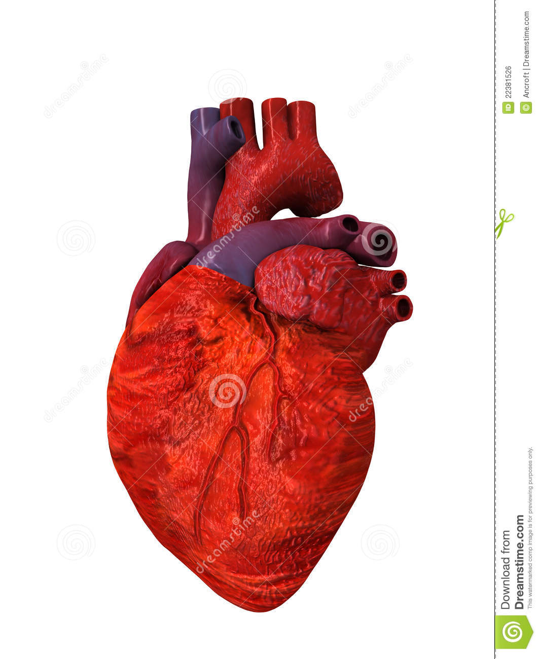 Coeur Dessin 3d Human Heart 3d Others Side Stock Illustration