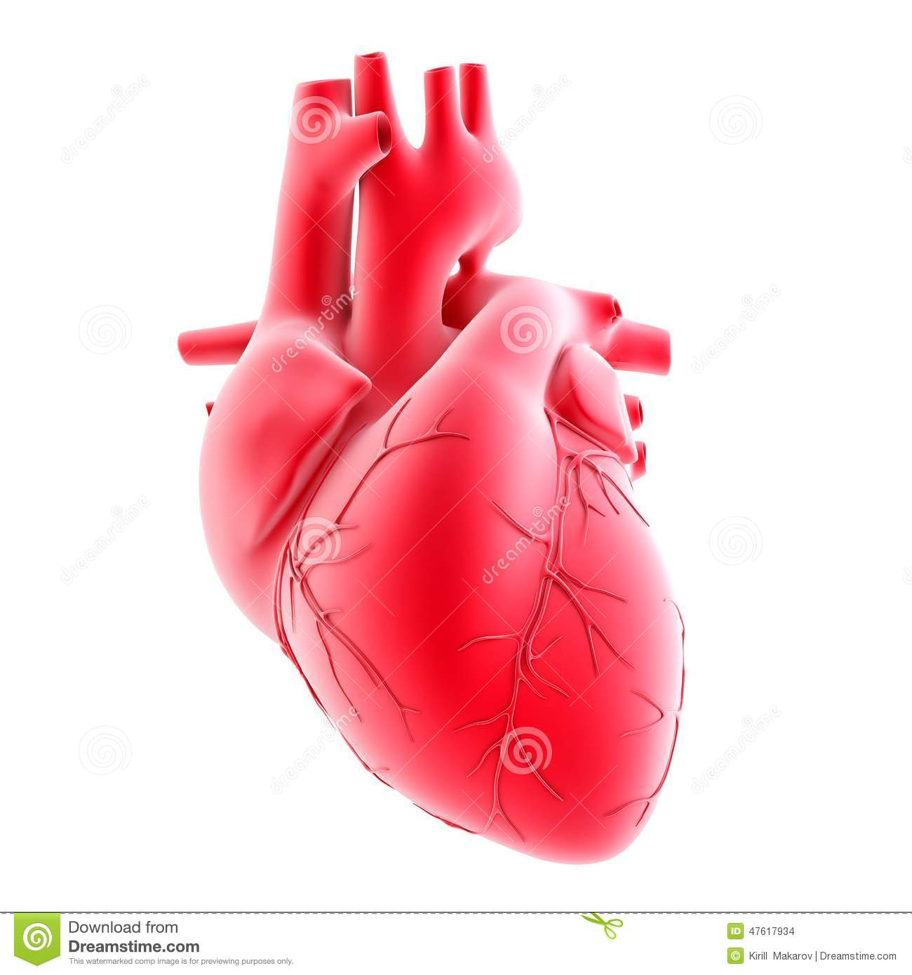 Anatomie Hart Human Heart 3d Illustration Isolated Contains Clipping