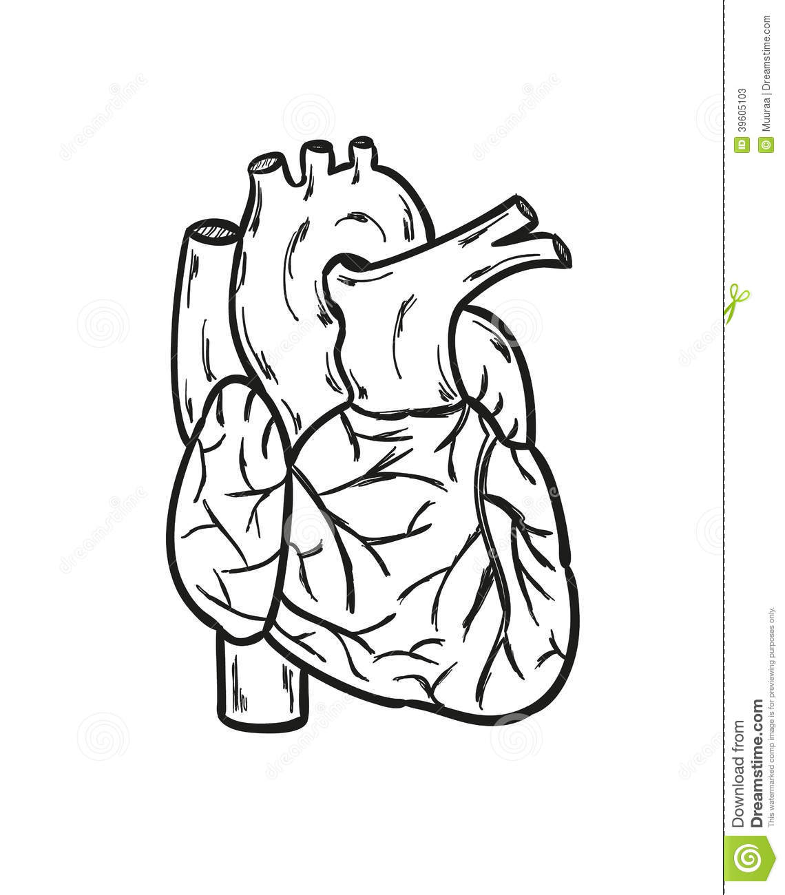 Coeur Dessin 3d Human Heart Stock Vector Illustration Of Healthcare