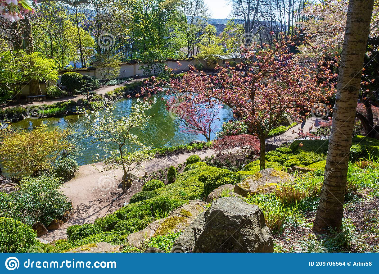 3 548 Sakura Pond Photos Free Royalty Free Stock Photos From Dreamstime