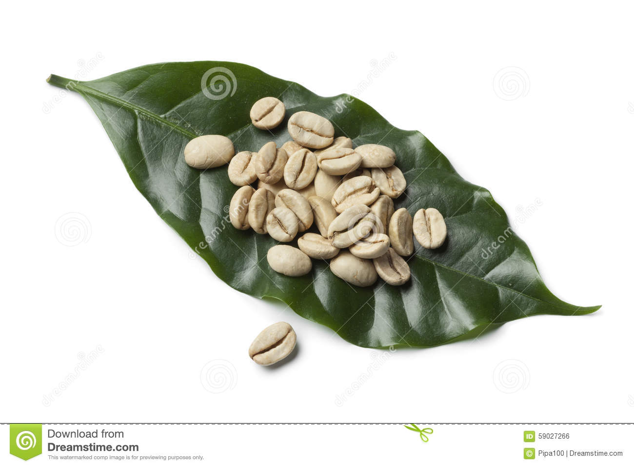 Unroasted Organic Arabica Coffee Beans Indian Malabar Green Unroasted Coffee Beans Stock Photo