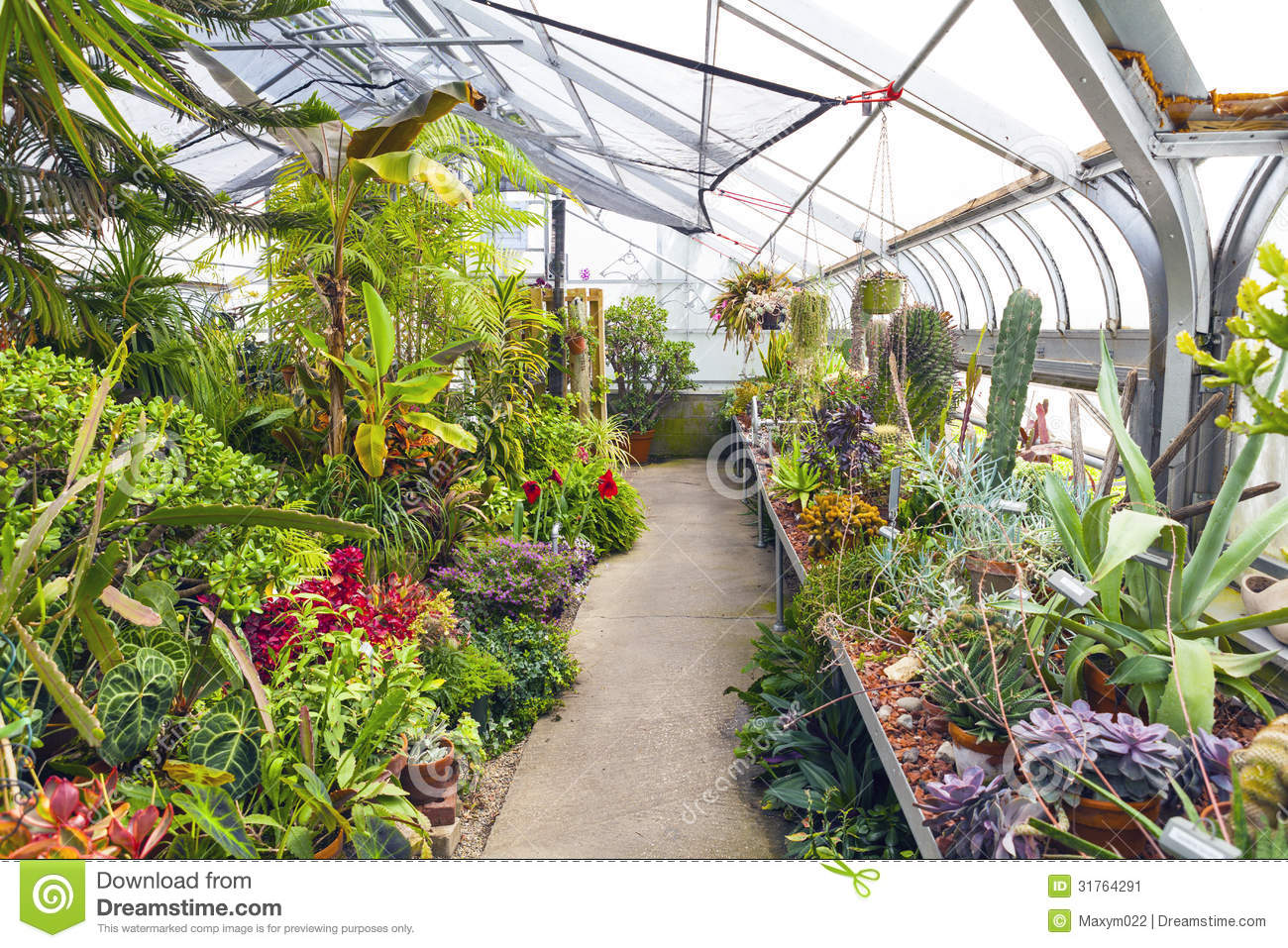 Inside Plants Inside Greenhouse Stock Image Image Of Outdoor Interior