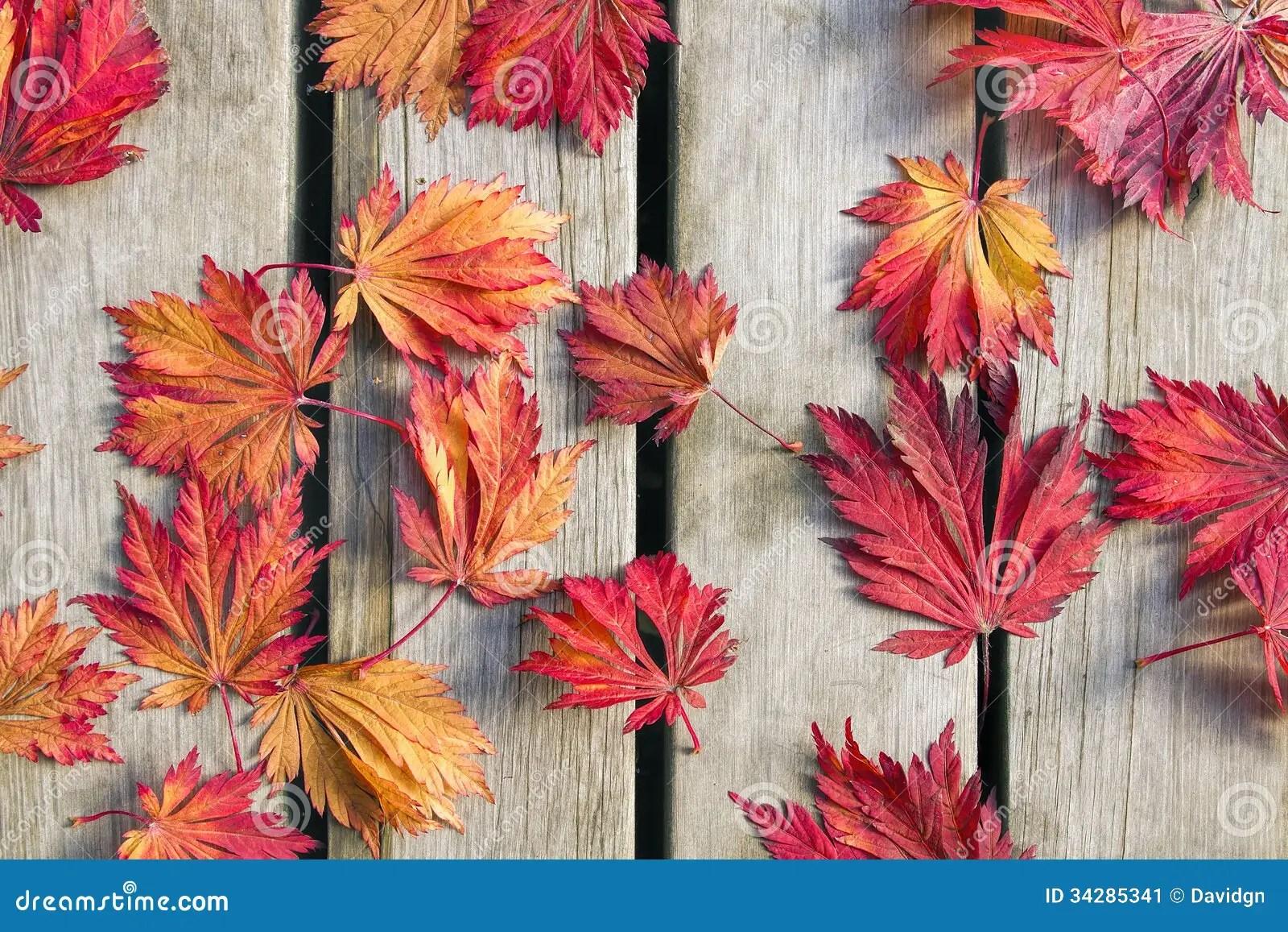 Fall Leaves Wallpaper Border Japanese Maple Tree Leaves On Wood Deck Stock Image