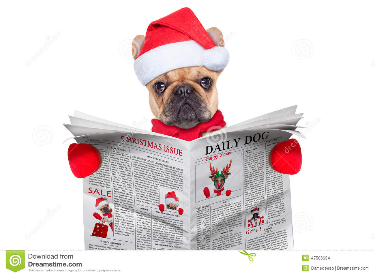 Cute Merry Christmas Wallpaper Dogs Journal De Lecture De Chien Photo Stock Image 47506634