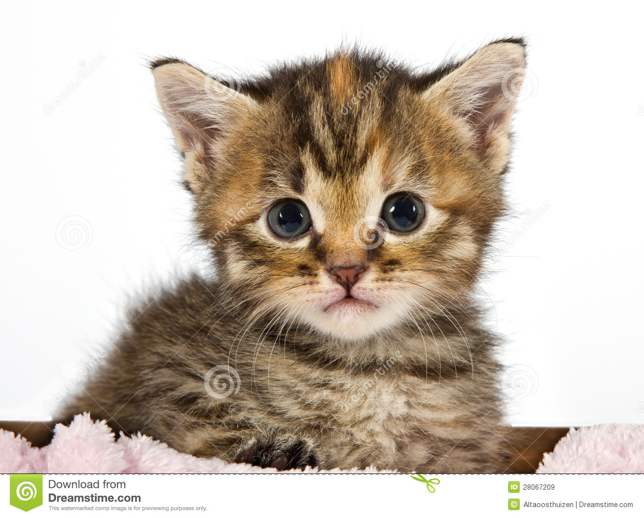 Cute Cat Gif Wallpaper Kitten Looking Adorable And Cute Royalty Free Stock Images