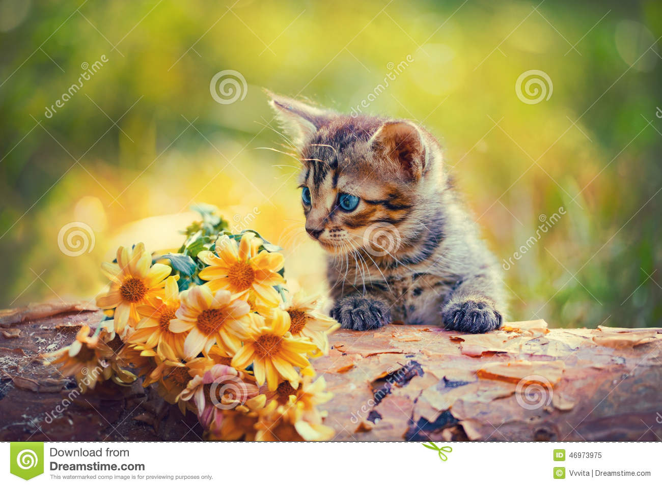 Cute Little Gray Cat For Wallpaper Kitten Looking At Flowers Stock Photo Image 46973975