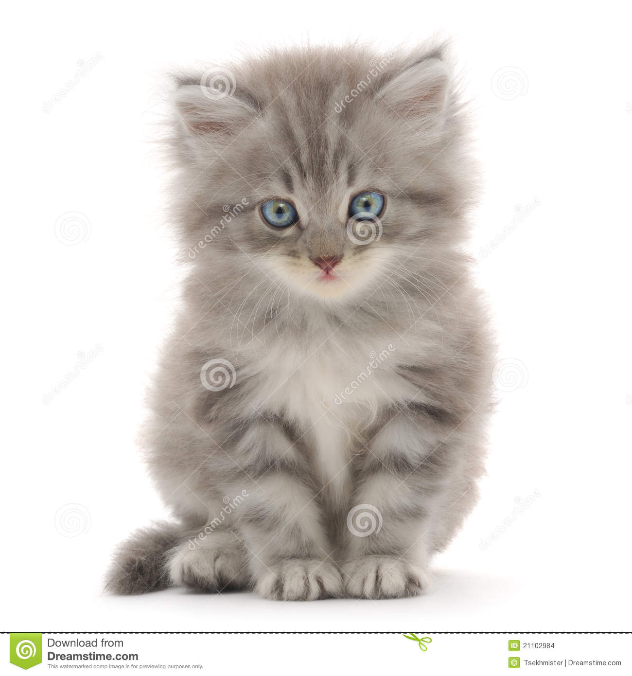 Cute Cats And Kittens Wallpaper Hd Cat Themes Kitten On A White Background Stock Images Image 21102984