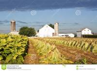 Lancaster County Tobacco Farm Stock Photo