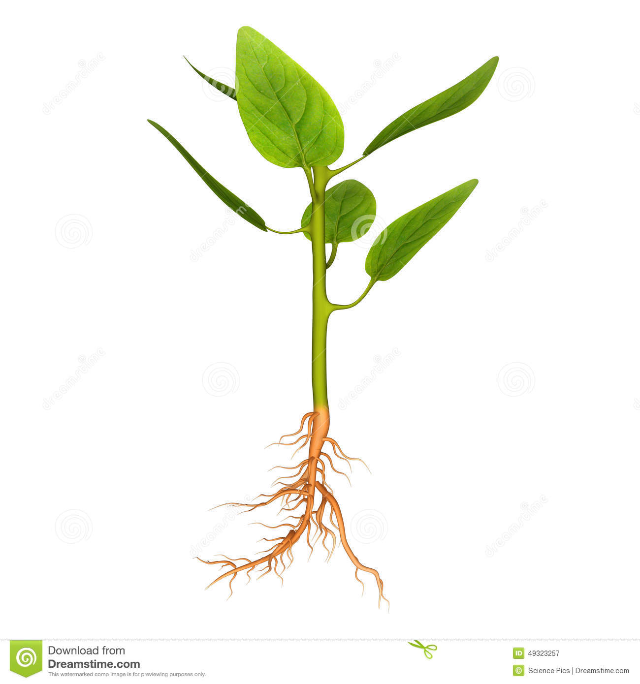 Credit Dictionary Definition Credit Defined Leaf Growth Stock Illustration Image 49323257