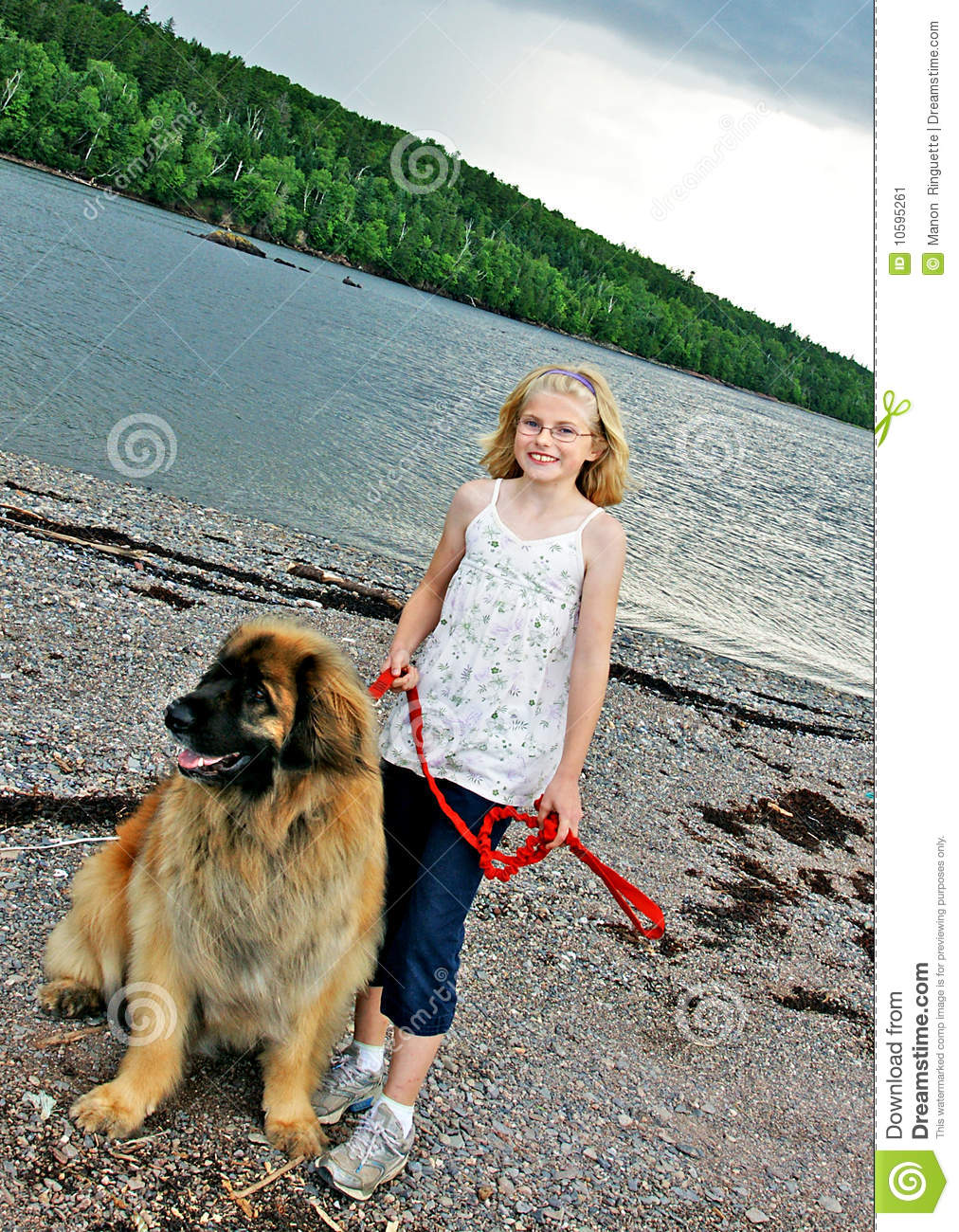 leonberger young