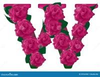 Letter W Cute Flower Illustration Stock Photo ...