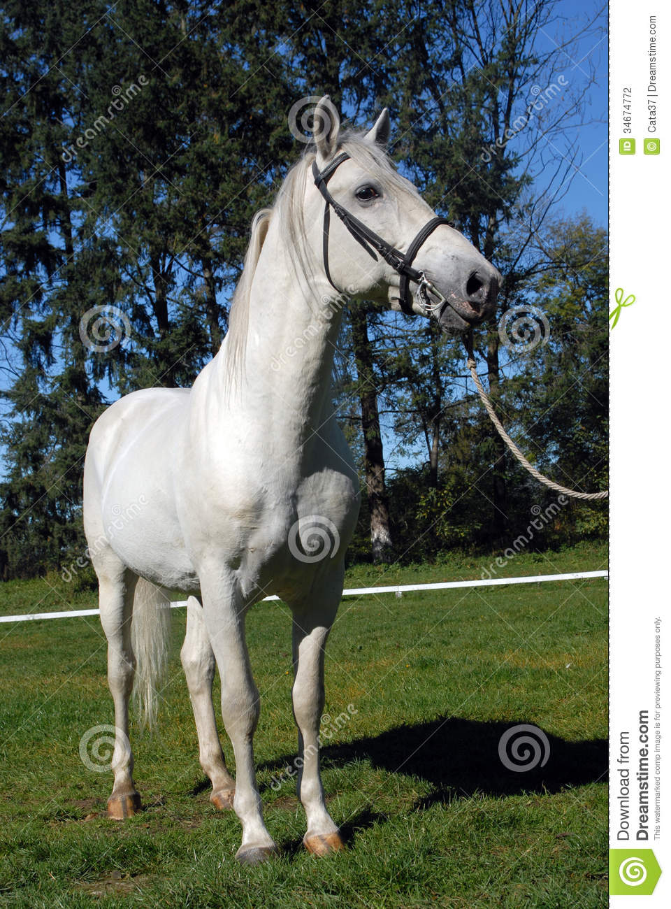 Fall Autumn Wallpaper Free Lipizzan Horses Stock Photography Image 34674772