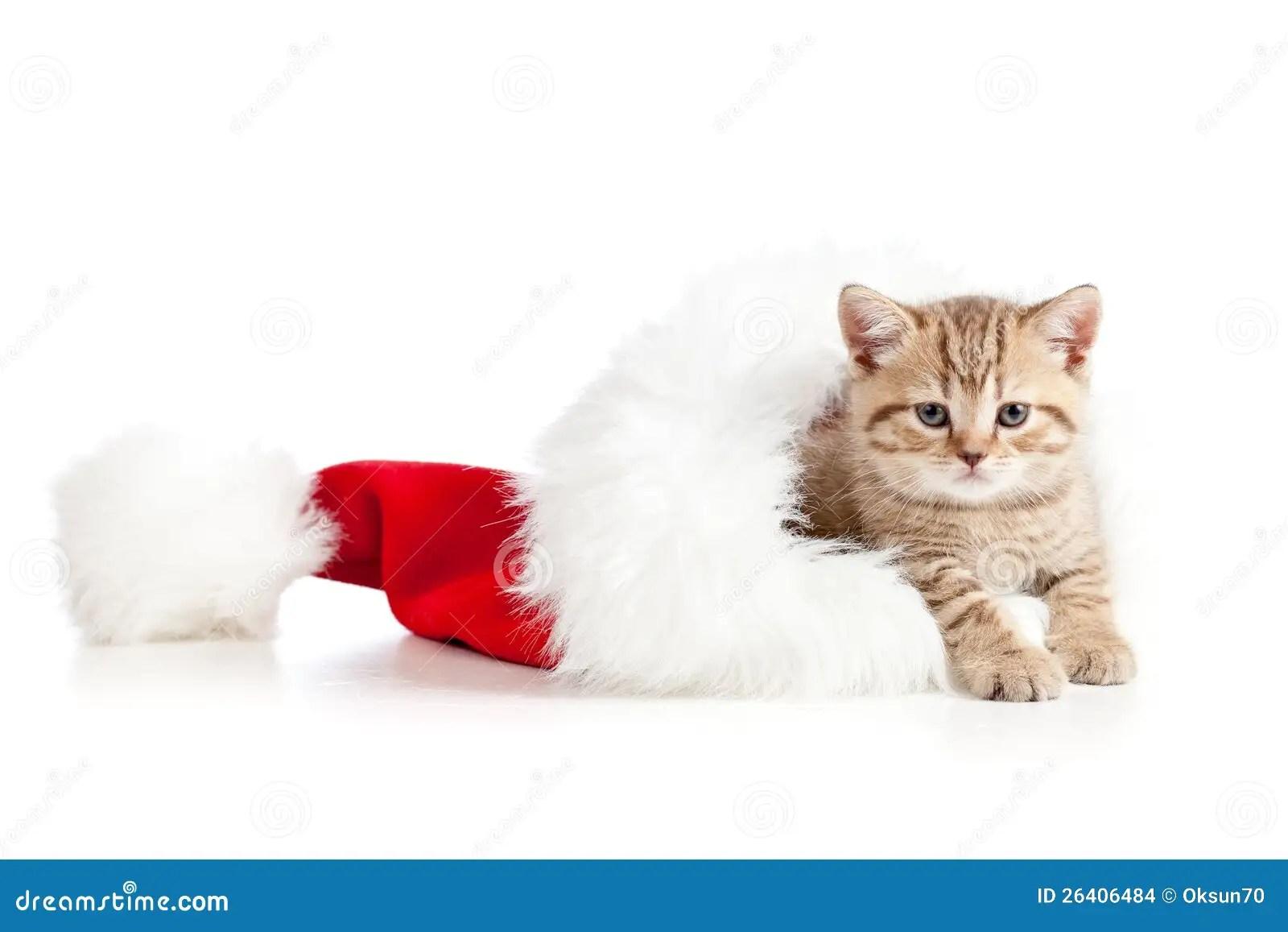 Cute Little Gray Cat For Wallpaper Little Cat Kitten In A Santa Claus Hat Stock Images